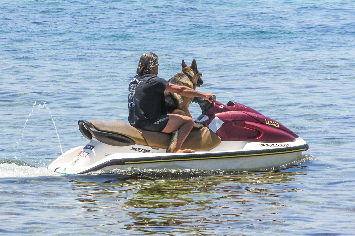Typical jet ski rental restriction: no pets allowed on the jet skis