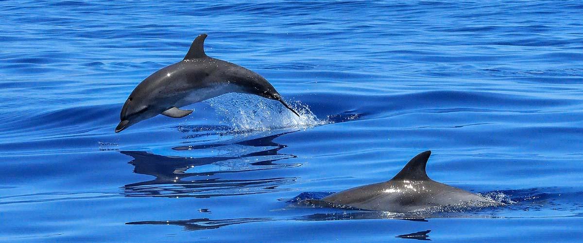 jet ski dolphin tours